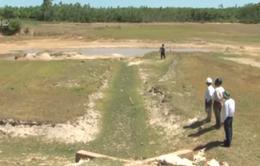 Quảng Trị: Nắng nóng gây khô hạn cho sản xuất nông nghiệp