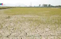 Ngành nông nghiệp kỳ vọng tăng tốc cuối năm