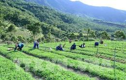 Nông nghiệp giảm tăng trưởng vì thiên tai, dịch bệnh