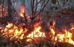 Tỉnh Thừa Thiên - Huế đánh giá thiệt hại do cháy rừng gây ra