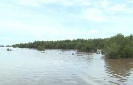Trồng rừng gây bồi - giải pháp bảo vệ dân ven biển ở ĐBSCL