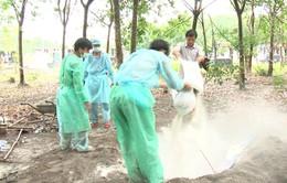 87 ổ dịch tả lợn châu Phi tại Bình Phước