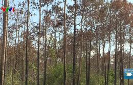 Bắt đối tượng cầm đầu phá hơn 10ha rừng thông ở Lâm Đồng