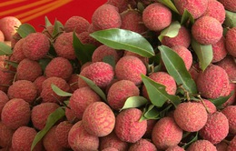 Bắc Giang chuẩn bị xuất khẩu vải thiều tươi sang Nhật Bản