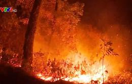 Vì sao cháy rừng liên tiếp xảy ra trên diện rộng trong thời gian qua?