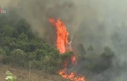 Cháy rừng ở Bố Trạch (Quảng Bình)
