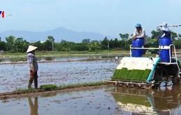 """HTX nông nghiệp độc quyền """"bóp nghẹt"""" sự phát triển của xã viên"""
