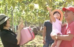 Du lịch nhận biết nông sản an toàn tại Ninh Thuận