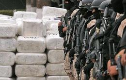 Gia tăng hoạt động buôn bán ma túy ở châu Âu