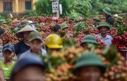 Khám phá chợ vải thiều lớn nhất Việt Nam