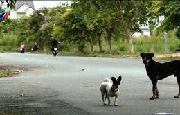 Bạc Liêu: Người dân bức xúc vì vấn nạn chó thả rông