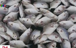 Người dân vây nhà máy nghi xả thải khiến cá chết hàng loạt ở Vũng Tàu
