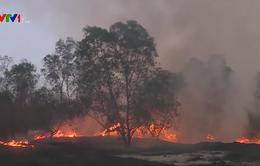 Quảng Trị: Nguy cơ cháy rừng bùng phát do nắng nóng