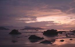 Những sinh vật biển đặc trưng của Côn Đảo