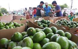 Thị trường nông sản tràn ngập sắc xanh