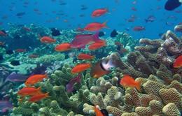 Các rạn san hô có nguy cơ biến mất vì biến đổi khí hậu