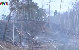 Đắk Lắk: Tình trạng lấn chiếm đất rừng diễn biến phức tạp