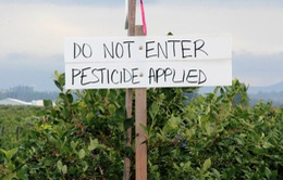 Mỹ không cấm loại thuốc trừ sâu bị nghi gây chậm phát triển não ở trẻ