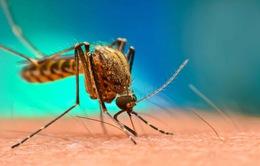 """Hai hòn đảo của Trung Quốc gần như """"xoá sạch"""" dấu vết loài muỗi"""