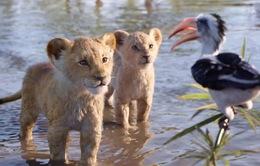 """""""The Lion King"""" được dự đoán phá kỉ lục phòng vé của Disney"""