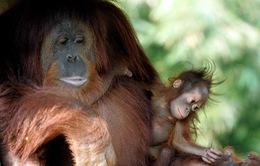 Báo động đỏ nguy cơ tuyệt chủng hơn 7.000 loài sinh vật