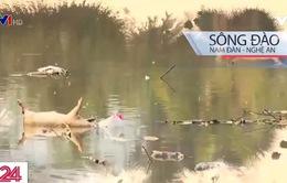 Sông Đào - Nguồn nước đầu vào cho 2 nhà máy nước sạch tại Nghệ An bị ô nhiễm nghiêm trọng