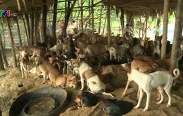 Chiến dịch bắt chó lạc ở Yangon, Myanmar