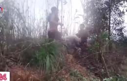 Đồng Nai: Các băng nhóm giang hồ ngang nhiên chiếm đất của dân