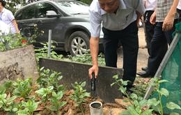 Hà Nội: Xử lý hơn 200.000 ổ bộ gậy
