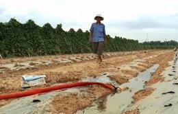 Chi phí cho nông nghiệp tăng cao do hạn hán nặng