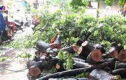 Nhiều cây xanh ở Hà Nội bật gốc sau trận mưa lớn