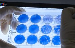 Hoàn tất nghiên cứu vaccine sốt xuất huyết tại Việt Nam