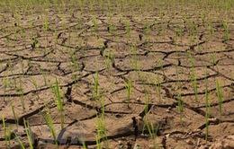 Tác động của El Nino tới thời tiết Việt Nam