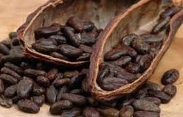 Giá cacao giảm mạnh