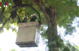 Vì sao Đà Nẵng chặt tỉa cây trong mùa nắng nóng?