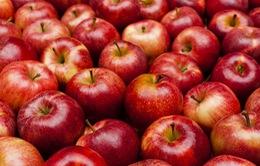Táo hữu cơ chứa nhiều vi khuẩn tốt cho sức khoẻ