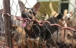 Trung tâm nuôi dưỡng cả trăm con chó mèo gây ô nhiễm giữa khu dân cư Hà Nội