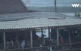 Ảnh hưởng bão số 2, Ninh Bình mưa to, gió mạnh cấp 3