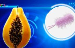 Mỹ: 62 người nhiễm khuẩn salmonella do ăn đu đủ