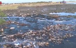 Báo động tình trạng ô nhiễm cảng cá tại Thừa Thiên Huế