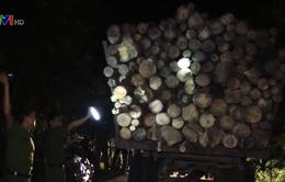 Bắt giữ nhóm khai thác rừng trái phép quy mô lớn