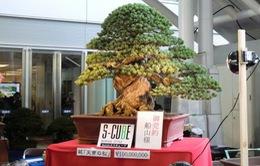 Kích thước nhỏ, tại sao Bonsai luôn dẫn đầu về giá trong thế giới cây cảnh?