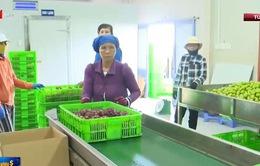 Gần 2 tỷ USD vốn ODA đầu tư vào nông nghiệp