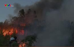 Phú Yên: Nỗ lực chữa cháy rừng trong đêm