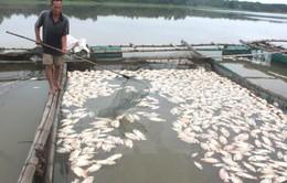 Xác định nguyên nhân cá chết trên sông Chà Và