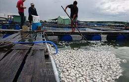 Vũng Tàu: Nghi nhà máy xả thải làm cá chết, người dân yêu cầu xét nghiệm mẫu nước
