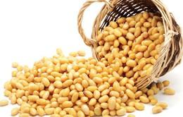 Giá đậu tương và các sản phẩm từ đậu tương đồng loạt giảm