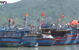 """Hàng chục nghìn tàu cá không thể đánh bắt xa bờ: Không thể vì """"tình"""""""