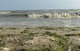 Mỹ: 21 bãi biển đóng cửa vì tảo độc