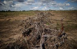 """Tác động """"hủy diệt"""" của nạn phá rừng và biến đổi khí hậu"""